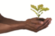 black-hands-with-plant_orig.png