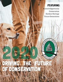CSF - 2020 Year-End Report - Cover.png