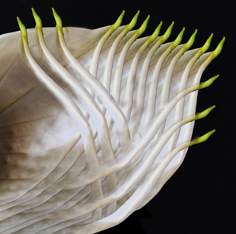 'Medusa' by Edward McCavana (11 marks)