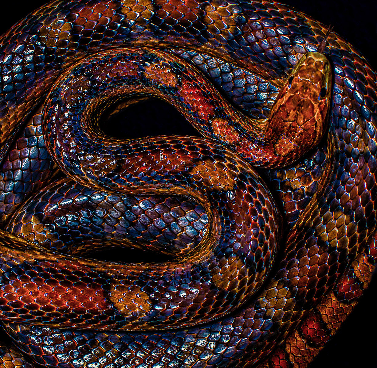 COLOUR - Snake Skin by Brian Larkin (12 marks)