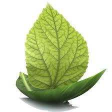 Santé naturopathie