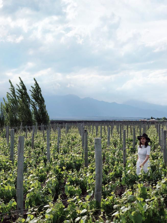 3 días en Mendoza / Ruta del vino
