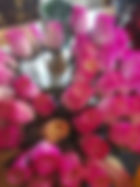 rose bud white pink tips.jpg