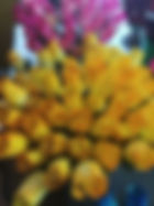 rose bud yellow orange tips.jpg