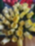 rose bud yellow.jpg