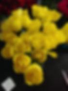 Yellow Open Rose.jpg
