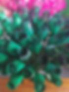 rose bud green black tips.jpg