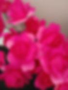 pink hot pink