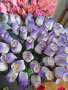 rose bud white purple tips.jpg
