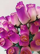 rose bud white w violet
