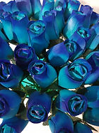 rose bud lt blue w dk blue