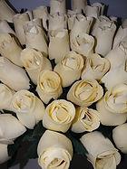 rose bud white
