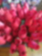 rose bud red.jpg