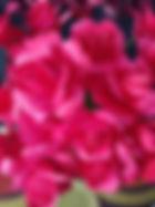 red (2).jpg