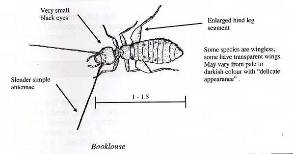 Booklice