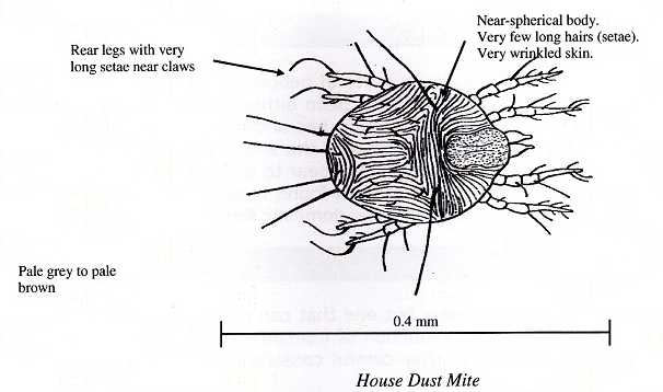 House Dust Mite