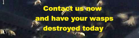 Click through for contact to have wasps exterminated today for £39 in Greater Glasgow, Ayrshire, Inverclyde and across western Scotland.