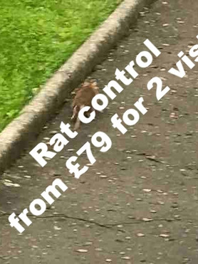 Rat Control in Greater Glasgow and Ayrshire