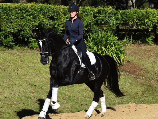 Stunning Imported Mare For Sale