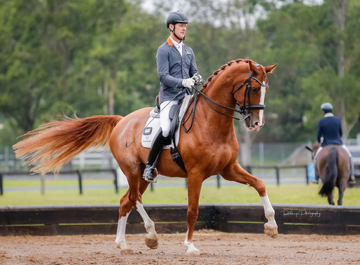 Willinga Park Spot On wins 7 year old young horse test
