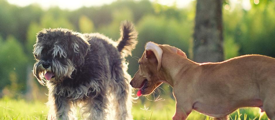 HENLEY PARK DOG PETITION