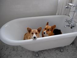 doggy bath