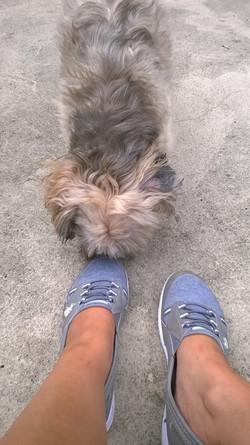 PetSitting_915 (38)