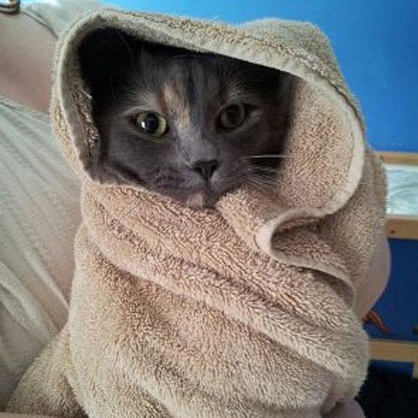 kittytowel