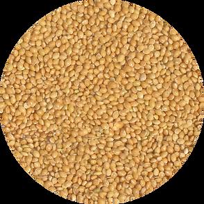 Yellow Millet