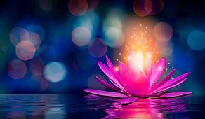 lotus%20Pink%20light%20purple%20floating