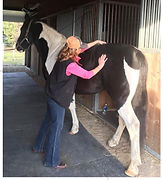 Equine Massage Therapy