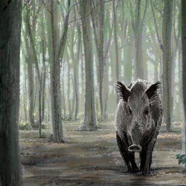 Wild Boar in Berlin