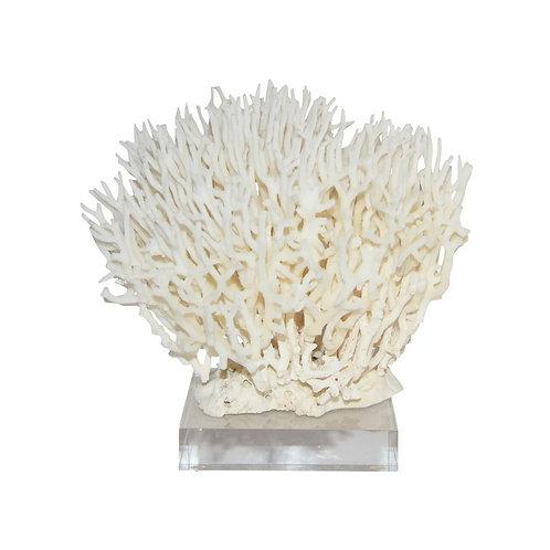 Birdsnest Coral On Acrylic Base Small