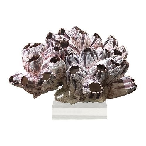 Barnacle Coral On Acrylic Base Small