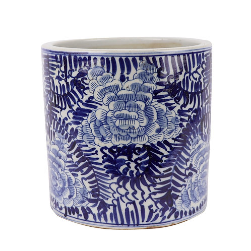 Blue And White Orchid Pot Blooming Flower