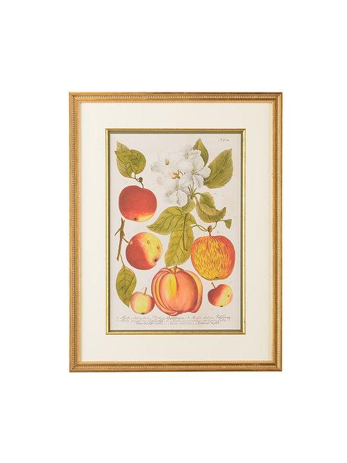 Apples Wall Art