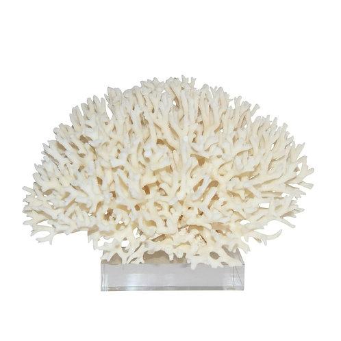Birdsnest Coral On Acrylic Base Large