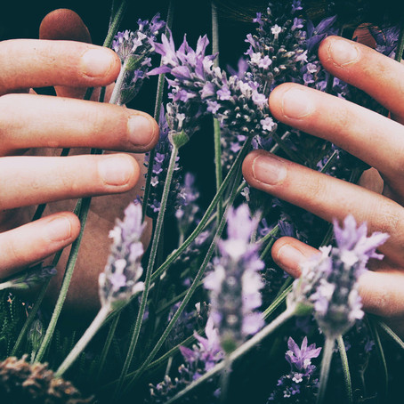 The Top 5 Essential Oils We Use & Recommend