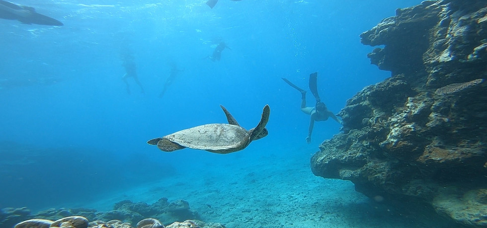 Sea Turtles just outside the reef