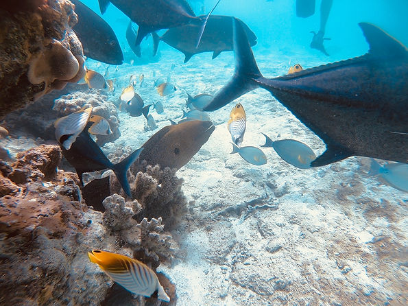 Lagoon Discovery marine life is awesome