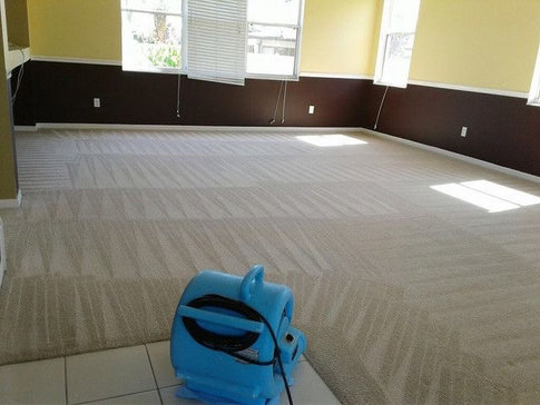 louisville carpet cleaning service pure clean carpet cleaning