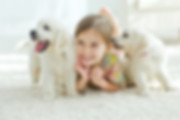 pure clean is a carpet clening sevce in mt washington,ky 40047, mount washingtons best carpet cleaning company,