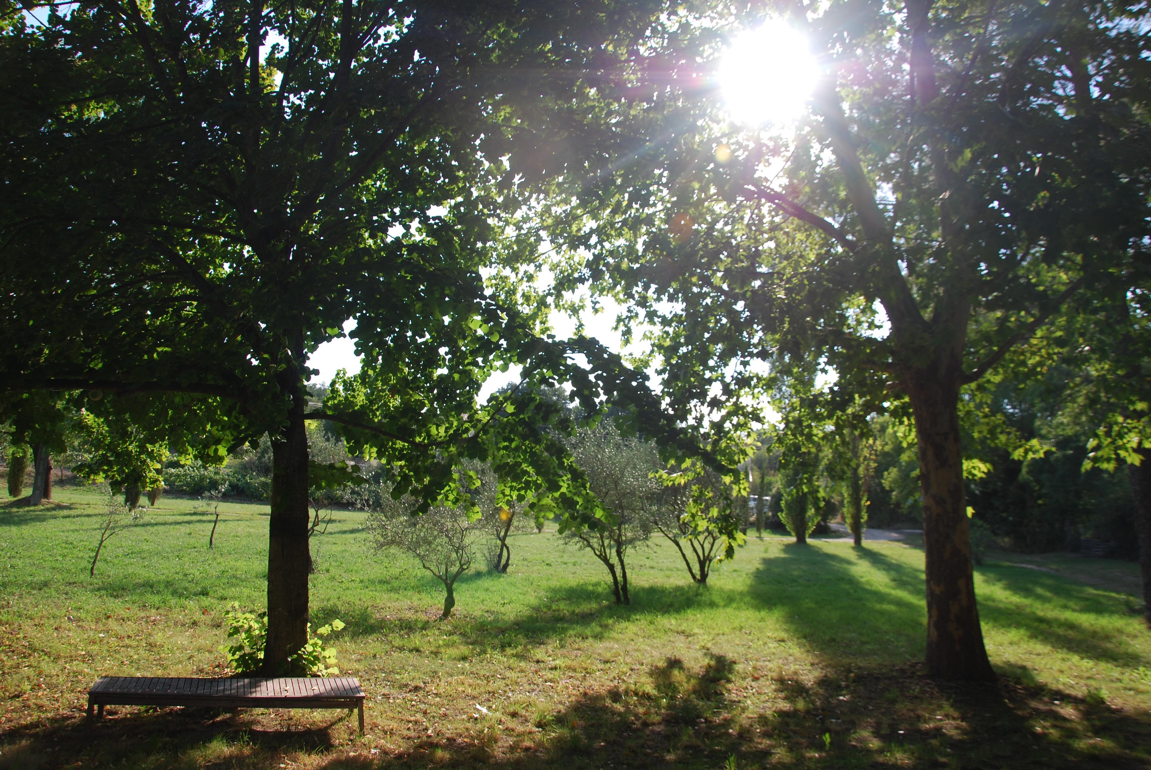 Olive Grove