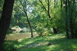 Mill Riverbank
