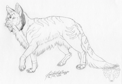 Lyca T Dhole RESIZED.png