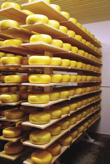 Cellar-full-rack-1_220