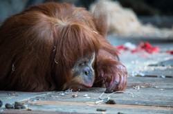 Jacqui B Photography Melb Zoo in  winter