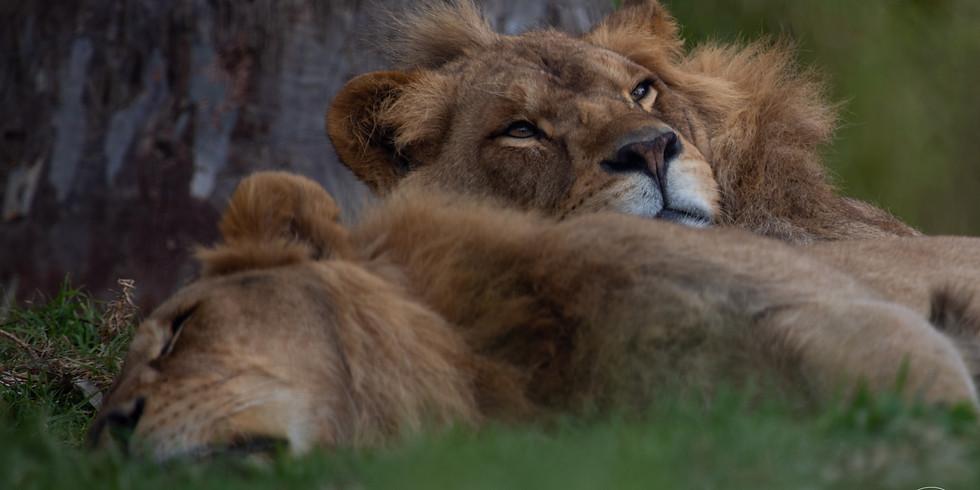 Wildlife workshop - Melbourne Zoo