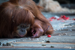 Jacqui B Photography Melb Zoo in Winter-