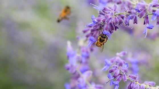 alowyn Gardens bees.jpg